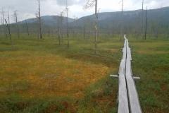 Moorlandschaft im Pyhä-Luosto NP