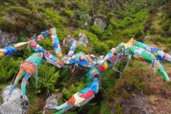 die Plastikkrabbe gibts dank dem vielen  Müll im Meer :-(
