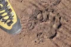 gar nicht so klein so ein Bärenpfotenabdruck - Foto by ewaldontour
