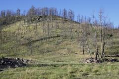 eine große Herde Hirsche im Custer