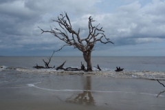 Driftwood Beach auf Jekyll Island