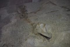 kleines Dino-Skelett