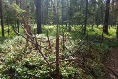 im Wald der Kreuze