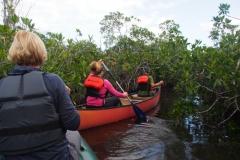auf Paddeltour in den Mangroven