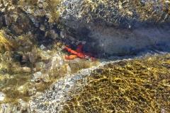 Seestern am Schnorchelstrand