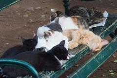 Mittagsschlaf der Katzen von Kotor