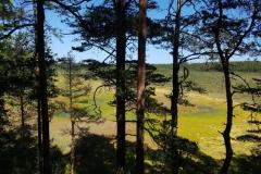 Moorlandschaft im Lahemaa NP