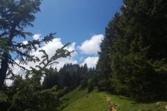 auf dem Weg zum Gipfel im Allgäu