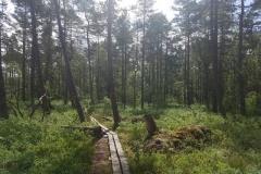 Bohlenweg im Store Mosse Nationalpark