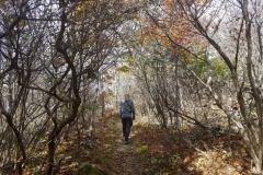 auf dem Appalachian Trail