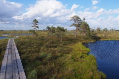 Bohlenweg über das Moor